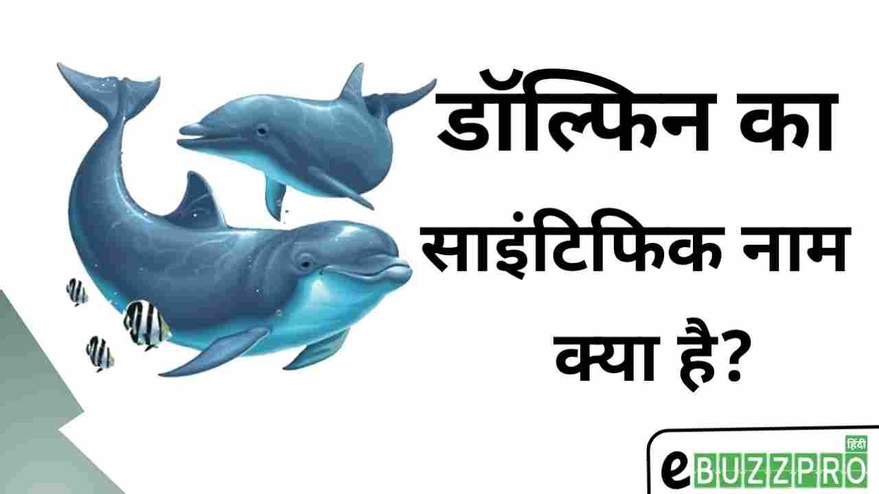 डॉल्फिन का साइंटिफिक नाम क्या है? Dolphin Ka Scientific Naam Kya Hai?