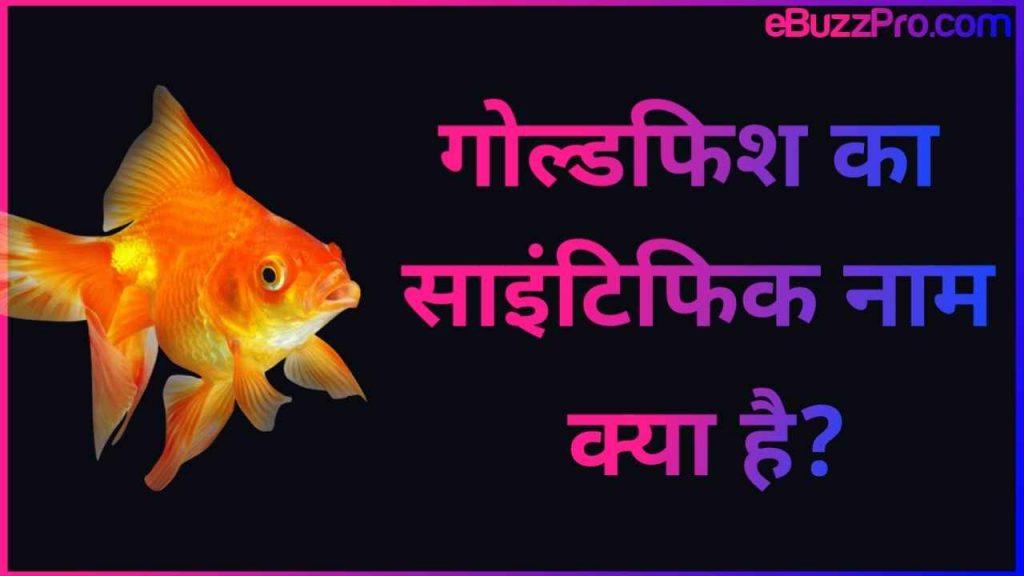 Goldfish Ka Scientific Naam Kya Hai: गोल्डफिश का साइंटिफिक नाम क्या है